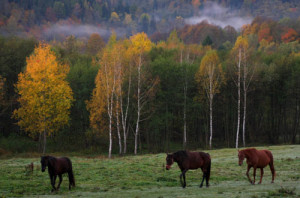 Fot. Izabela Majewska