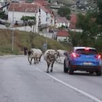 Bośnia