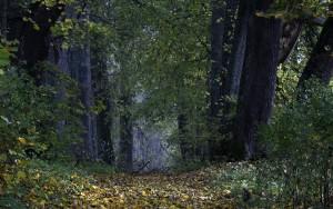 Fot. Renata Zwięglińska