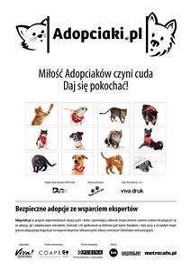 Adopciaki 2017