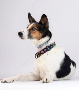Warsztaty fotografii psów