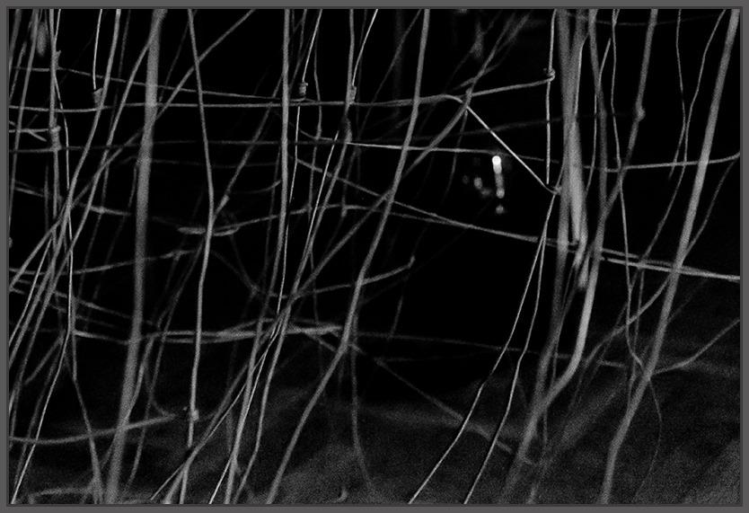 Kat. Fotografia artystyczna - 3. miejsce - Kale Ambra
