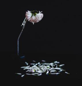 Kat. Przyroda - 1. miejsce -  Jola Eliasz